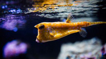 Aquariums du Muséum-Aquarium de Nancy