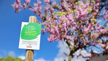 Campagne de sensibilisation en faveur de la protection des arbres