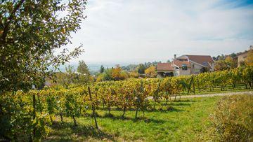 Les vignes de Dommartemont